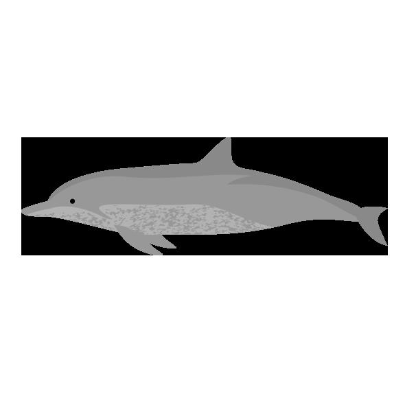 ミナミバンドウイルカのイラストPNG