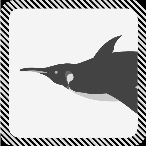 カテゴリー海鳥類のイラスト
