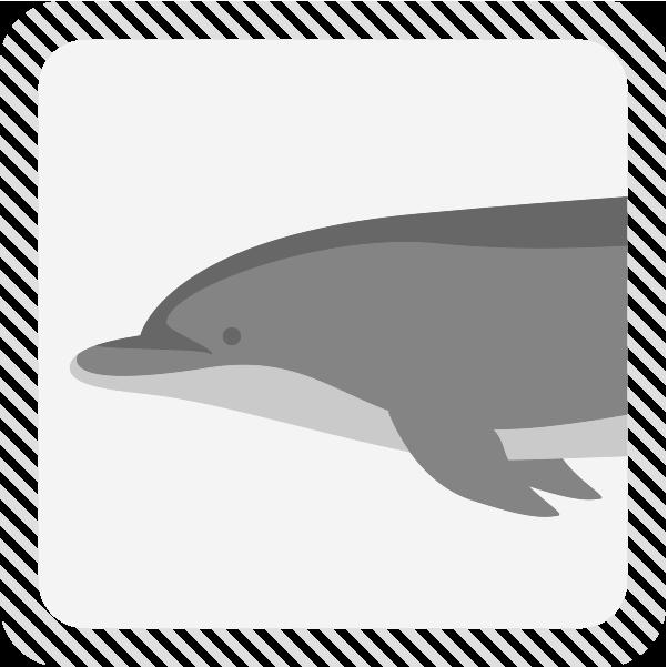 カテゴリーイルカのイラスト