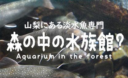 森の中に水族館!?山梨県立富士湧水の里水族館