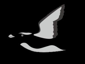 カンムリウミスズメのイラスト