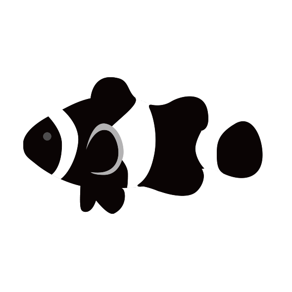 黒いカクレクマノミ ブラックオセラリス