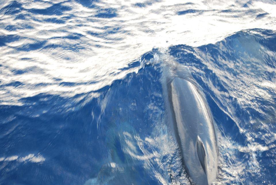 イルカとクジラの違い
