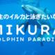 野生のイルカと泳ぎたいなら御蔵島