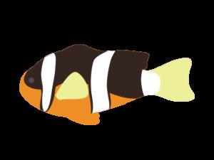 クマノミのイラスト
