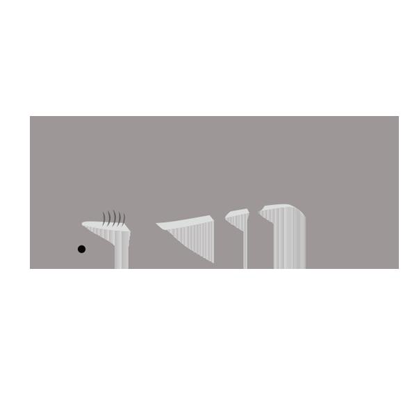 アカシュモクザメのイラスト