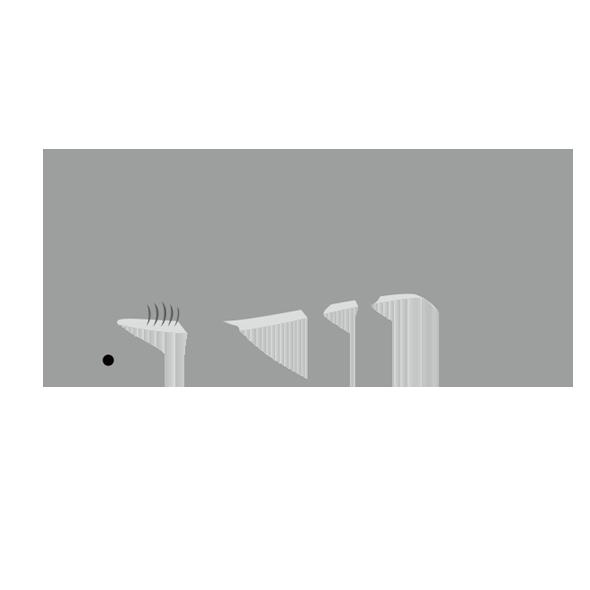 ヒラシュモクザメのイラスト