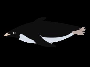アデリーペンギンのイラスト