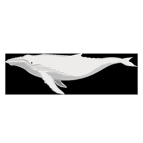 白いザトウクジラミガルー