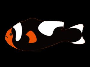 トウアカクマノミのイラスト