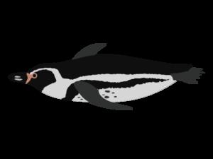 フンボルトペンギンのイラスト