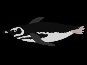 マゼランペンギンのイラスト