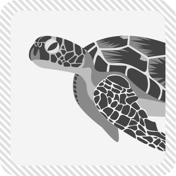 ウミガメのカテゴリー画像