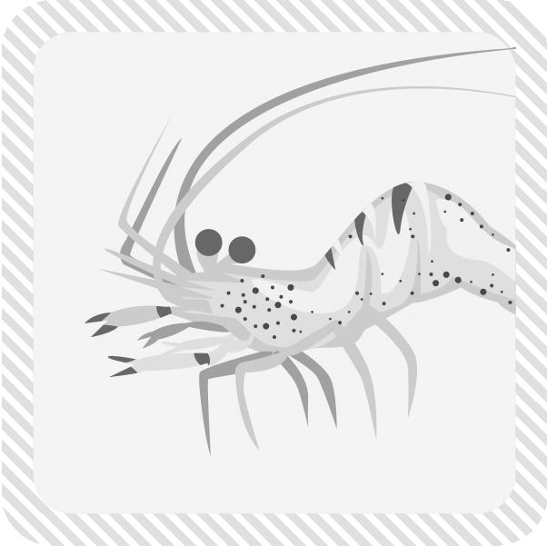 甲殻類カテゴリーイメージ